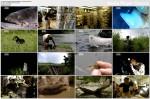 Dziwaczne stworzenia / Nick Baker's Weird Creatures (2007) PL.TVRip.XviD / Lektor PL