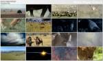 Dzika Afryka / Wild Africa (2001) PL.TVRip.XviD / Lektor PL